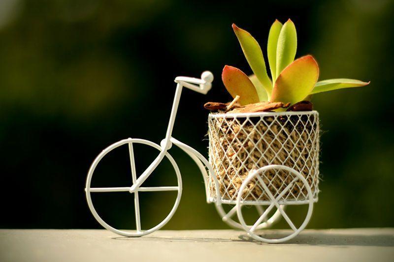 "Mini jardim na bicicleta por R$ 25 na <a href=""http://osminimundos.tanlup.com/product/1016521/verde-bike"" target=""_blank"">Os mini mundos</a>"