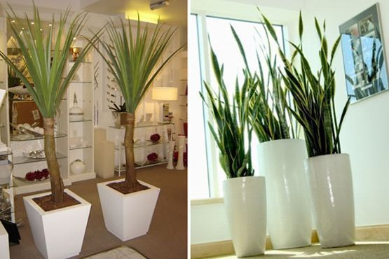 plantas para decoracao de interiores ? Doitri.com