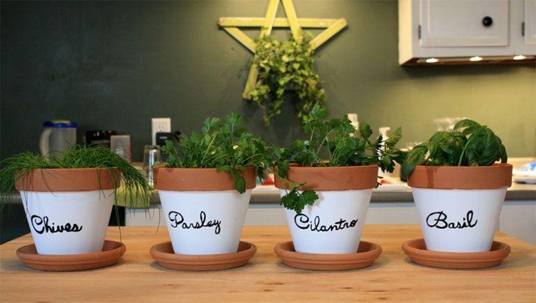 "Foto: Reprodução / <a href=""http://brookenotonadiet.com/2014/04/23/diy-indoor-herb-garden/"" target=""_blank"">Brooke: Not On a Diet</a>"