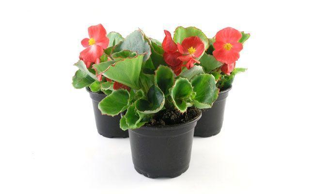 Espaço Verde Jardinagem 7 tipos de plantas para quem tem pouco tempo