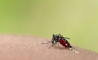 Como proteger sua casa da dengue