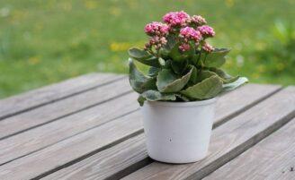 Como cuidar bem de plantas em vaso