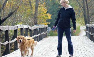 Faça do seu cachorro um excelente personal trainer