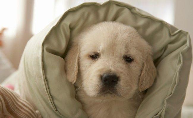 bichinho dias frios Como proteger o seu bichinho de estimação dos dias frios