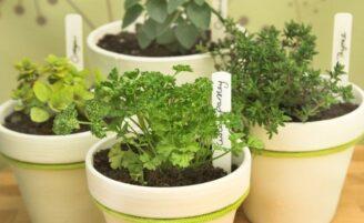 Cultive hortaliças e temperos na sua casa