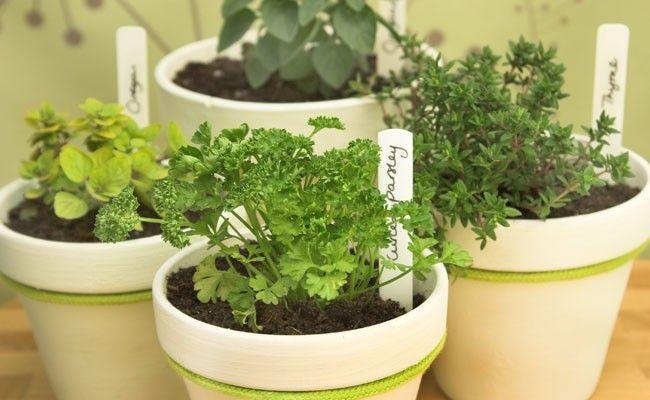cultive hortali as e temperos na sua casa dicas de mulher. Black Bedroom Furniture Sets. Home Design Ideas