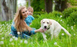 Prevenção: como evitar mordidas de cachorro em crianças