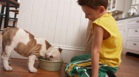 Crianças devem ter animais de estimação?