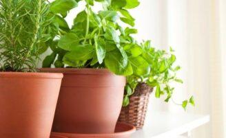 Como montar uma horta em apartamentos