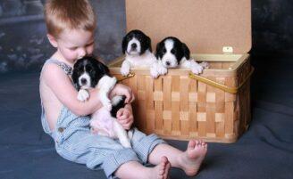 Ter um animal de estimação faz bem para o desenvolvimento das crianças