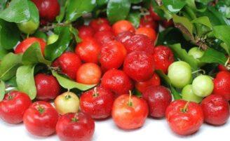 Os 10 alimentos mais saudáveis do mundo