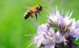 Creme com veneno de abelha é novo aliado contra rugas