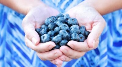 Blueberry: conheça os benefícios dessa fruta do bem