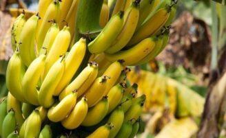 Bananas: benefícios e dicas sobre o amadurecimento da fruta