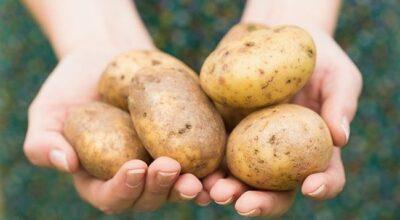 Batata: 22 formas de usá-la além da culinária
