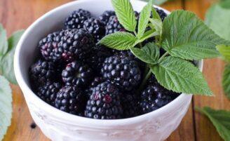 Chá de amora ajuda a emagrecer e oferece outros benefícios