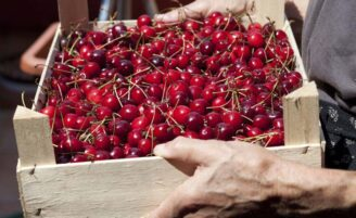 Alimentação orgânica: guia completo para comer bem sem gastar muito
