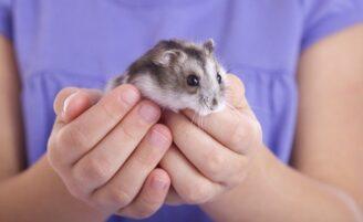 10 doenças que os bichos de estimação podem transmitir aos humanos