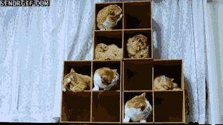 Organizador de gatos. Foto: Reprodução / Giphy