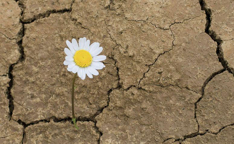 7 Razões Para Ser Persistente E Nunca Desistir Dos Objetivos