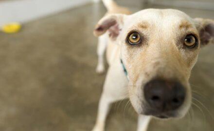 53 mitos e verdades sobre animais de estimação