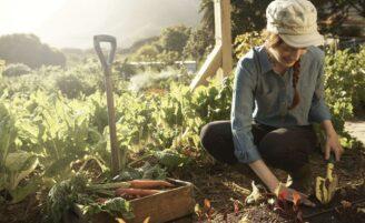 Horta em casa: o que plantar, como cultivar e cuidar das hortaliças