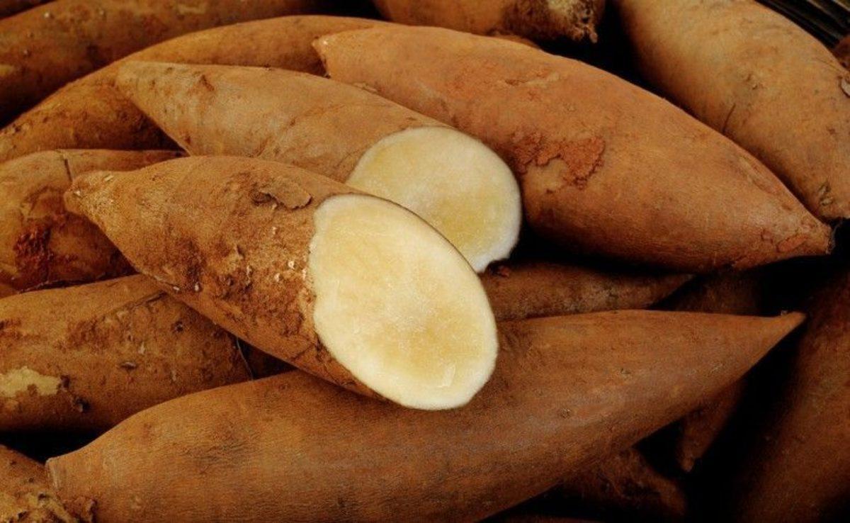 Agua De Batata Para Escurecer O Cabelo batata yacon: conheça todos os benefícios e aprenda receitas