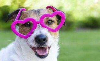 15 coisas que só quem ama cachorros entende