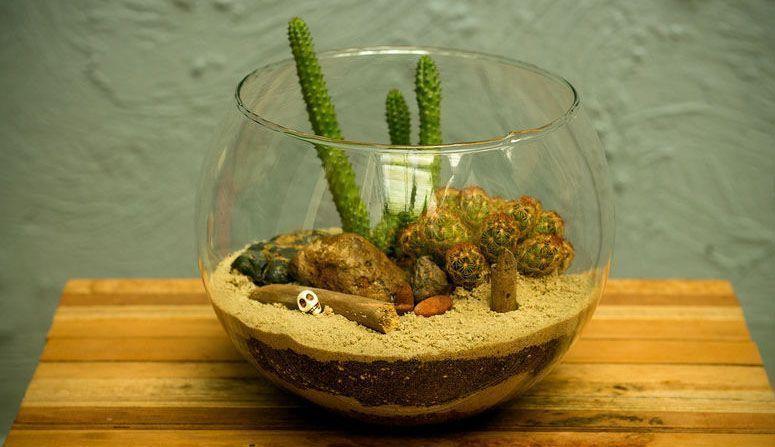 mini jardim de vidro : mini jardim de vidro:Mini jardim: como fazer, onde comprar e fotos para inspirar