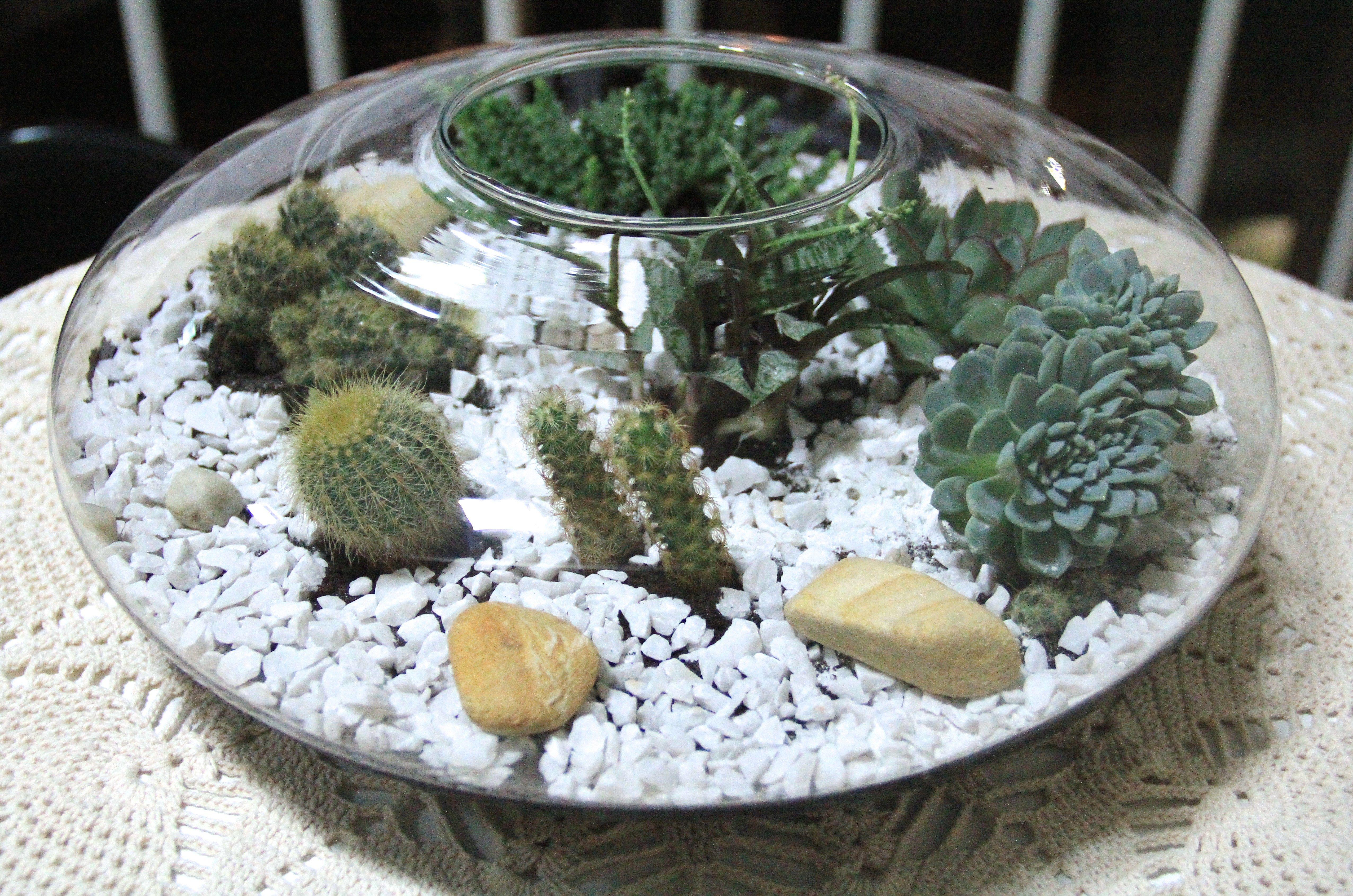 mini jardim suculentas:Como fazer um mini jardim de cactos e suculentas