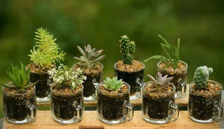 mini jardins em vidro : mini jardins em vidro:Mini jardim: como fazer, onde comprar e fotos para inspirar