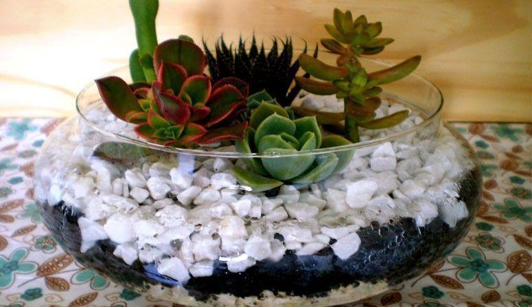 Como fazer um mini jardim de cactos e suculentas  Casa da Vovó