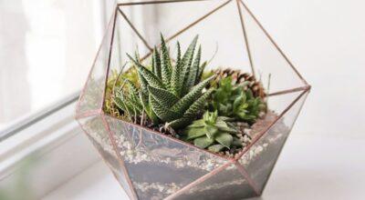 Como fazer um mini jardim de cactos e suculentas