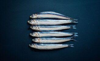 Anchova: o peixe que traz sabor e diversos benefícios para o seu prato