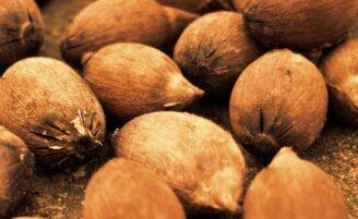 Óleo de babaçu: 8 bons motivos para adotar este produto no seu dia a dia