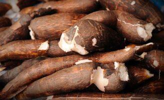 34 receitas incríveis com mandioca e os benefícios de se consumir essa raiz