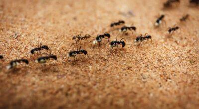 7 maneiras de acabar com as formigas na cozinha