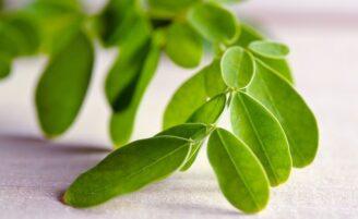 Moringa: a planta que previne o câncer e melhora o desempenho sexual