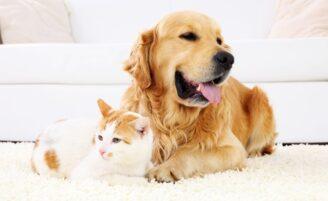 6 dicas de decoração para quem tem pet em casa