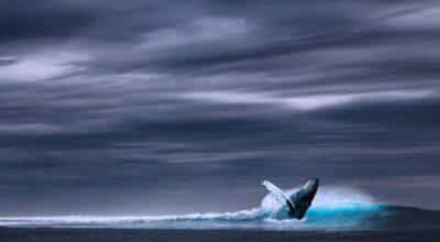 Jogo da baleia azul: como proteger seu filho desta ameaça