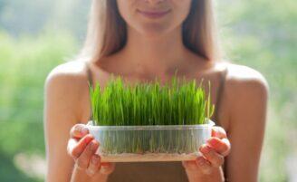 15 benefícios fantásticos da grama de trigo para sua saúde e beleza