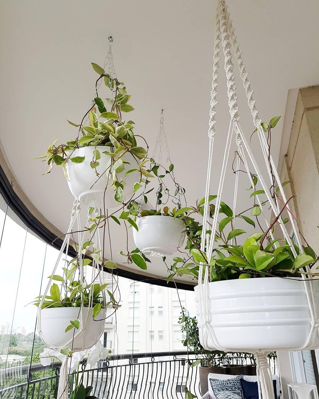 Super Plantas na decoração: crie ambientes mais bonitos e aconchegantes WJ05