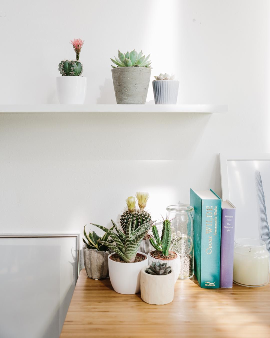 Plantas na decora o crie ambientes mais bonitos e for Plantas minimalistas