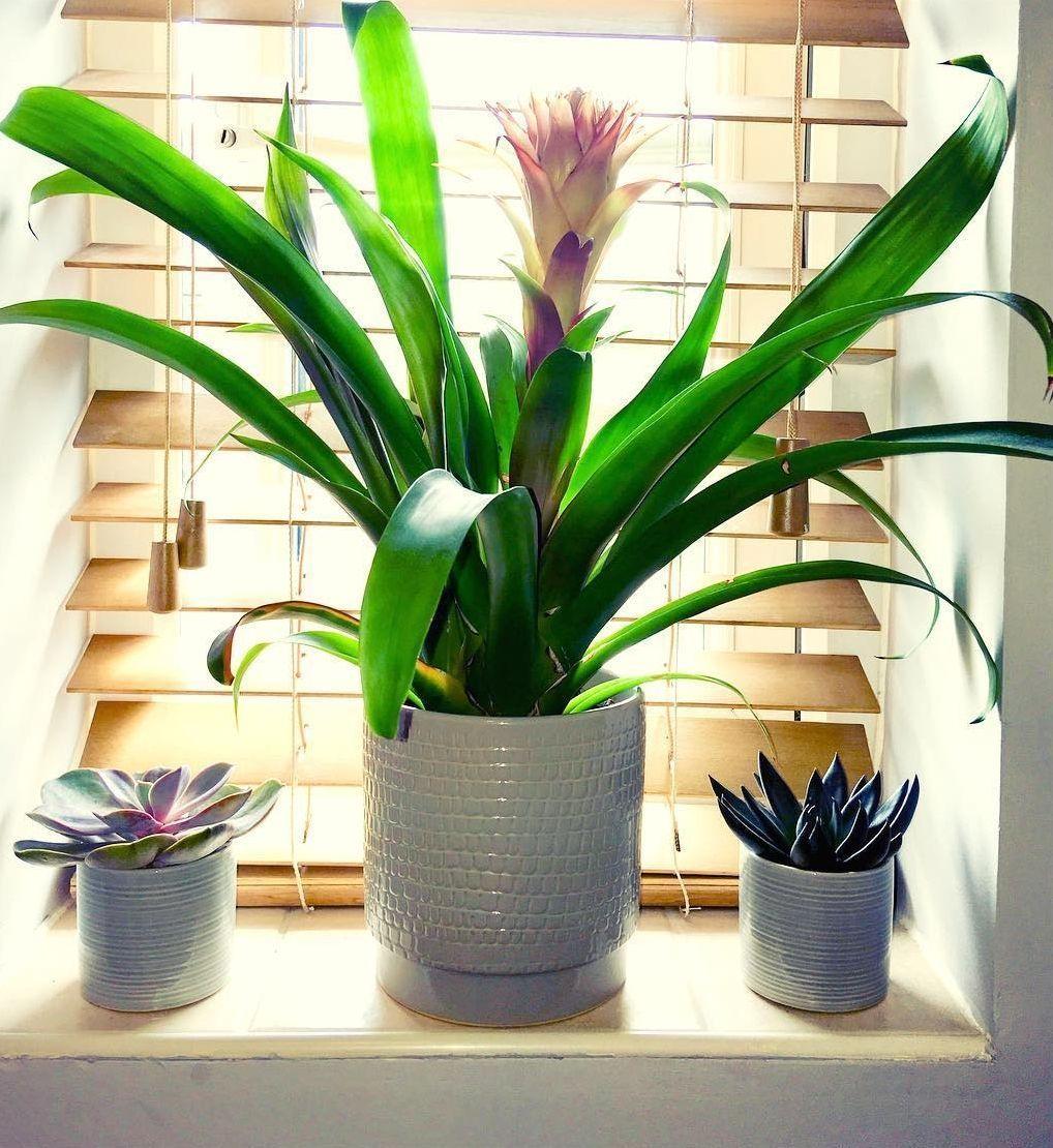 Amado Plantas na decoração: crie ambientes mais bonitos e aconchegantes AV97