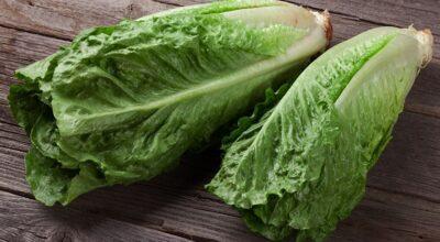 Chicória: hortaliça rica em antioxidantes, proteínas e fibras