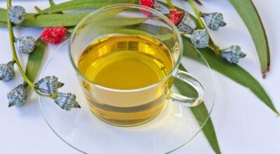 Chá de eucalipto: aprenda como fazer e conheça seus principais benefícios