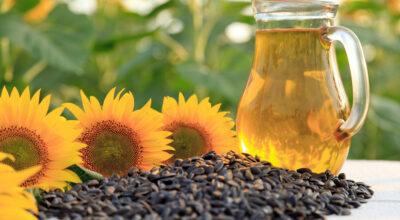 20 benefícios do óleo de girassol para sua pele, cabelo e saúde
