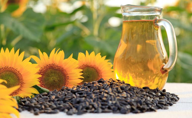 oleo de girassol e seus beneficios