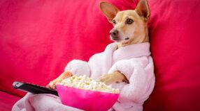 Qual série da Netflix mais combina com você? Descubra nesse teste!
