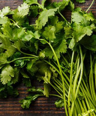 Coentro: 9 benefícios e muito mais sobre a erva que divide os paladares